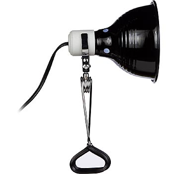 Talking Head Lighting